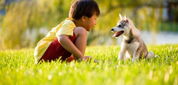 boy-with-dog-624x300.jpg