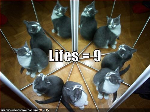 nine-lives-of-a-cat.jpg