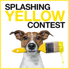 Spalshing-yellow-contest-V2-en.jpg