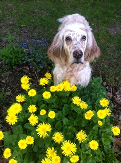 Emma and Yellow Flowers.jpg