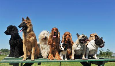 DogGroup.jpg