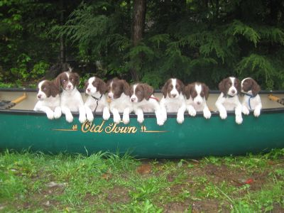 9 pups beached